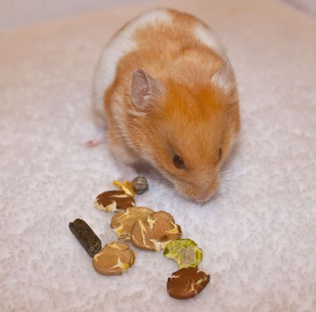a pet hamster sat eating some food