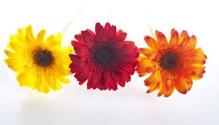 some artificial flowers lined up yellow, red and orange - isolated on white Stock Photo