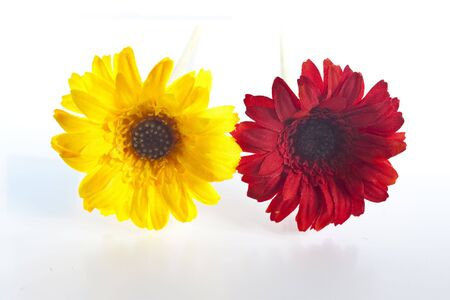 some artificial flowers side by side yellow and red - isolated on white background Stock Photo