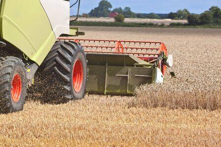 farmers working hard in the field splitting the wheat