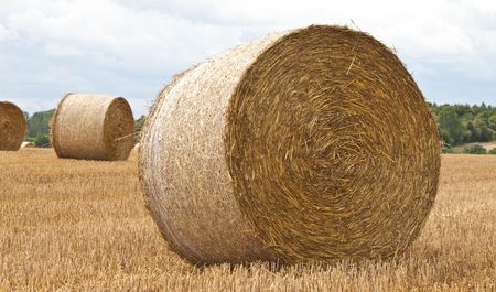 freshly made round hay bales in a field