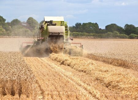 rear view of a combine harvestor collecting wheat from a field photo