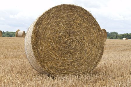 a fresh round bale of hay in a field Stock Photo