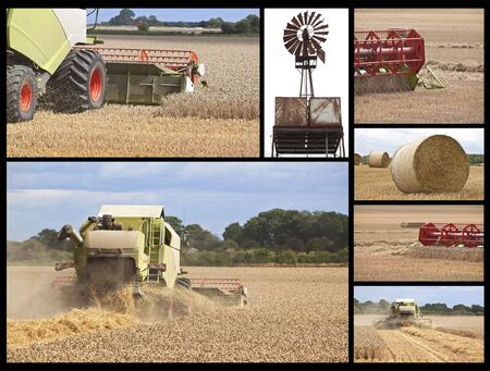 a collection of images about harvest time on the farm Stock Photo