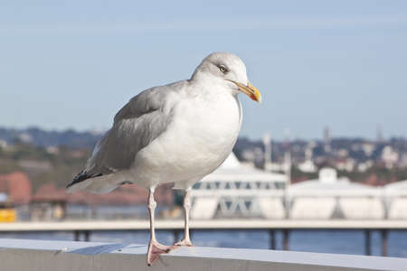 a seagull taking a rest at the seaside