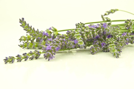 bunch of lavender flowers in soft focus Stock Photo - 15011756