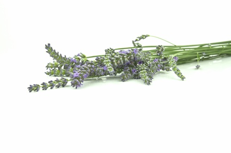 the green and purple colours of lavender Stock Photo - 15011745