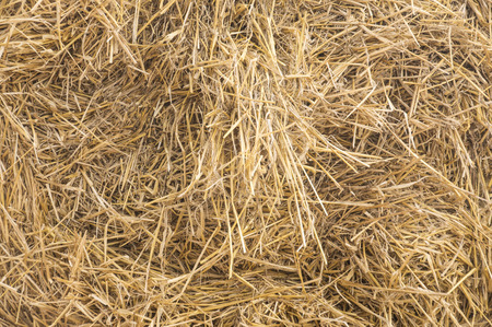 Dry straw macro shot. Background or Texture