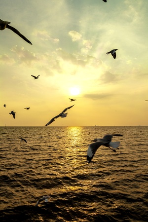 bird fly to sunset photo