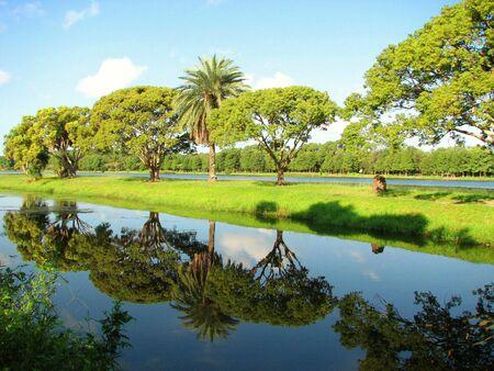 Tree Reflections In The Park Reklamní fotografie