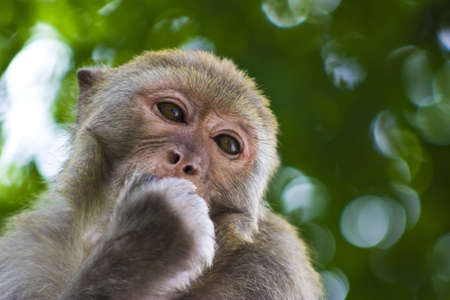 A close-up of a wild monkey in the forest around Guiyang, China  Stock Photo