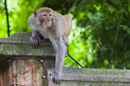 A monkey watching its surroundings
