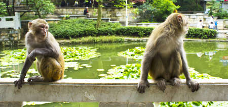 A mischevious monkey and his friend