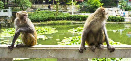 mischevious: A mischevious monkey and his friend