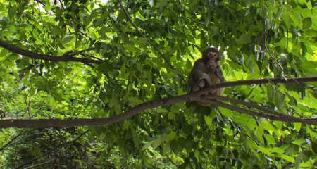 A Monkey in a Tree Stock Photo - 13849640