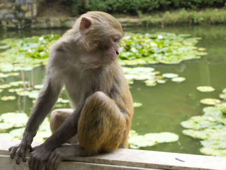 Monkey Looking at His Reflection Stock Photo - 13849650