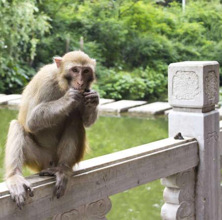A Shy Monkey Stock Photo