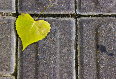 Heart Shaped Leaf on a Sidewalk photo