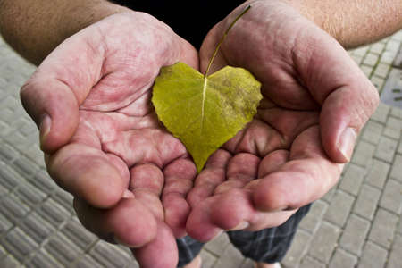 Heart Shaped Leaf in Male Hands