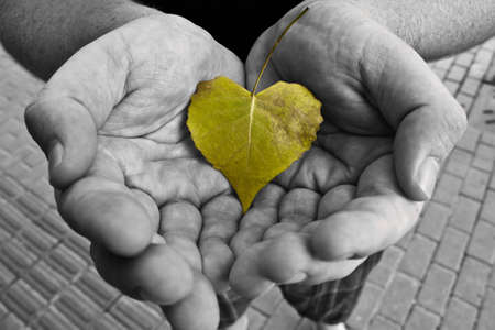 conserved: Black and White Hands with Green Leaf Stock Photo