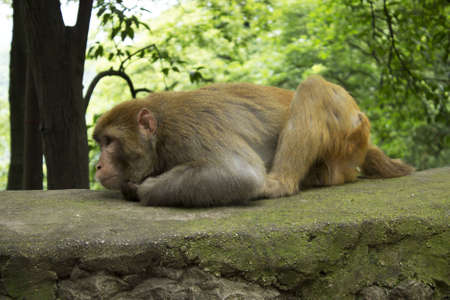 Monkey Napping
