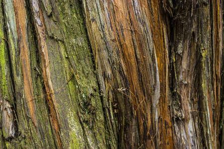 Beautiful Colorful Tree Bark Stock Photo