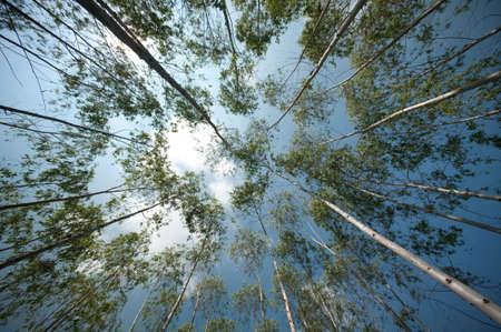 ucalyptus