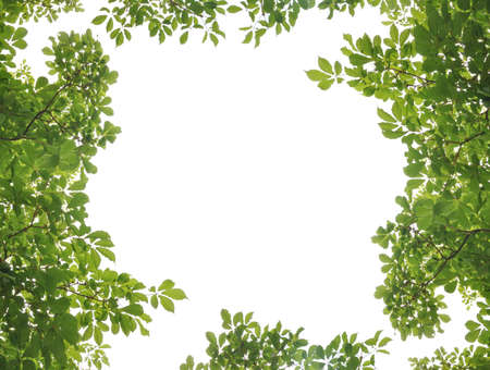 Green leaf picture frame Stock Photo - 13963920