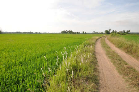 road and field in countryside of thailand