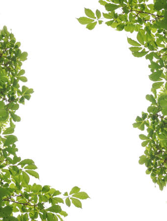 Green leaf picture frame  Stock Photo