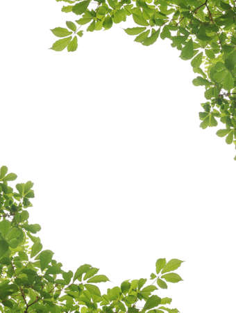 corbel: Green leaf picture frame  Stock Photo