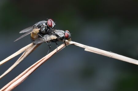 Flies are breeding on the grass