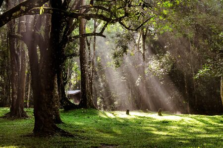 Light through the trees in the garden