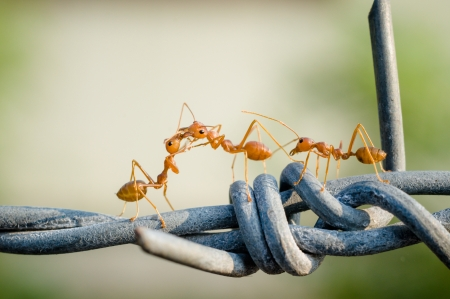 Ant walking on a barbed wire fence