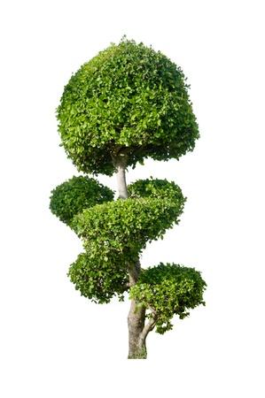 Bending tree on white background