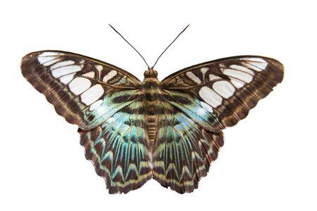 Parthenos  Sylvia butterfly on White background Stock Photo