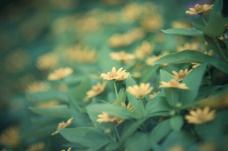 Yellow flower on green leaves background Stock Photo