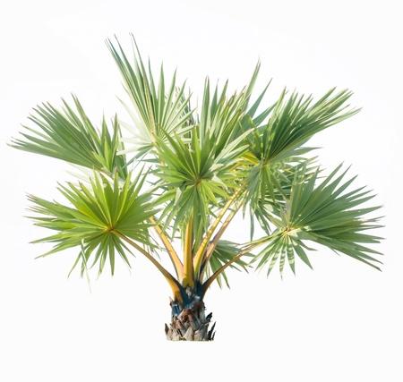 Palm tree adorned garden on white background