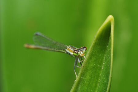 green dragonfly on green background