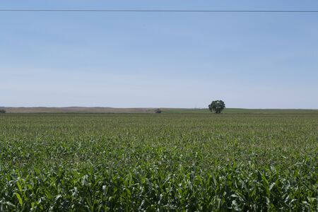 midwest: Midwest Field