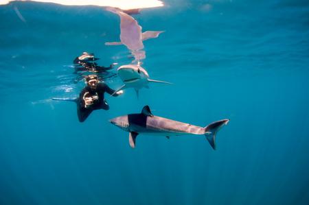 encounter: Shark Encounter