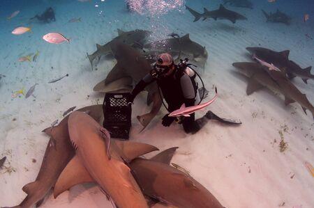sand shark: shark pack