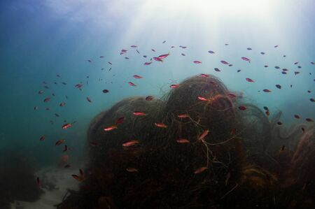 free diving: California Reef Stock Photo