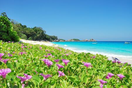 Purple wild flowers on beach. photo