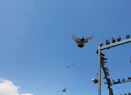 palomas volando: Palomas volando delante de la mezquita Yeni en Eminonu  Estambul Foto de archivo