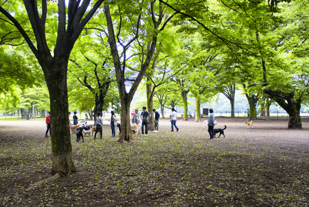 Tokyo, Japan - May 28, 2016 - Dogs and owners play in nature at Yoyogi park