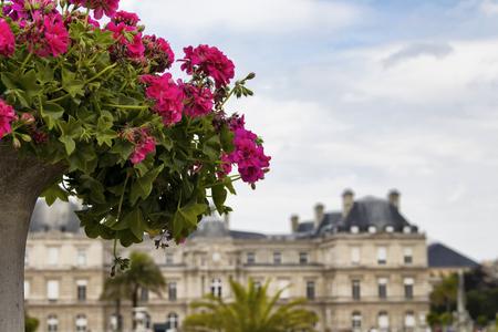 jardin de luxembourg: Close up flower at Jardin De Luxembourg in Paris Stock Photo