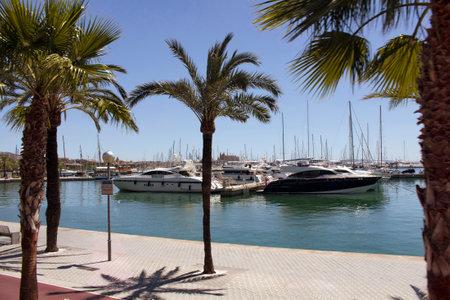 View of palm trees and many yachts at Palma De Mallorca marina.