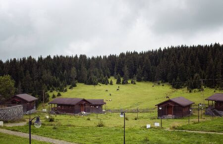 View of wooden high plateau houses surrounded by pine tree forest in foggy weather. Cows graze on grass field. It is captured in Trabzon/Rize area of Black Sea region located at northeast of Turkey.