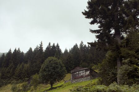 View of traditional, wooden houses at high plateau in pine tree forest in fog. The image is captured in Trabzon/Rize area of Black Sea region located at northeast of Turkey.